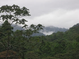 rainforest with background clouds