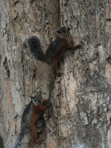 squirrels on tree