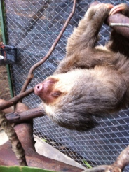 sloth at animal rescue center