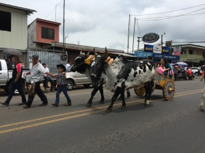 Ox and oxcart in parade