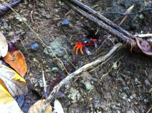 Crab in the brush